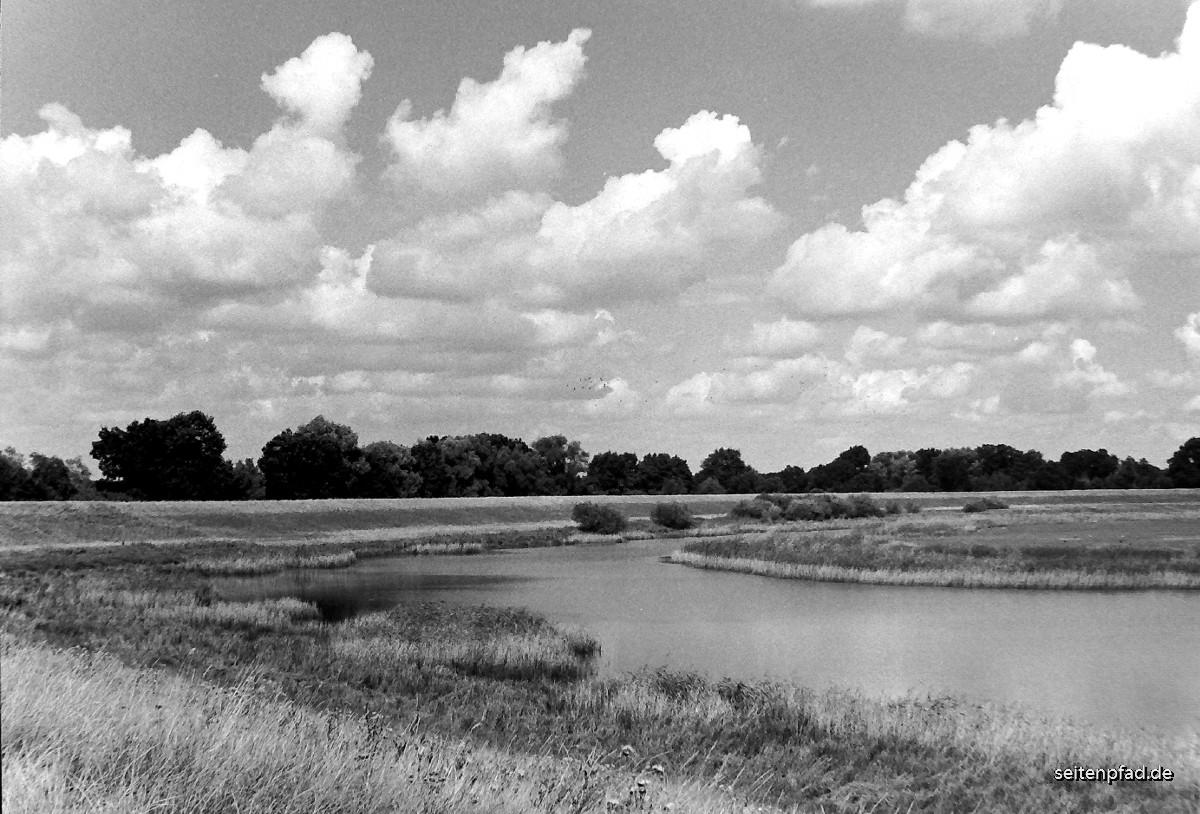 Heisterbusch bei Bleckede.