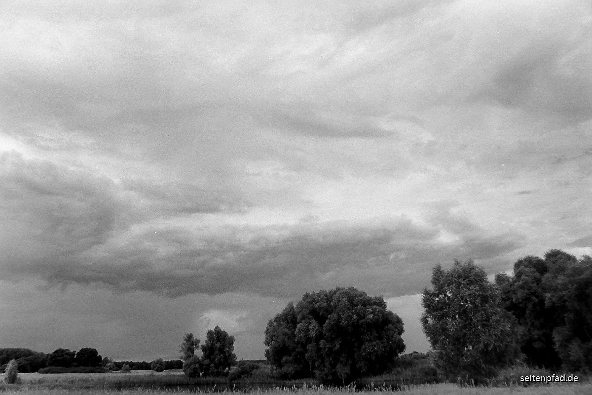 Elbwiesen bei Bleckede