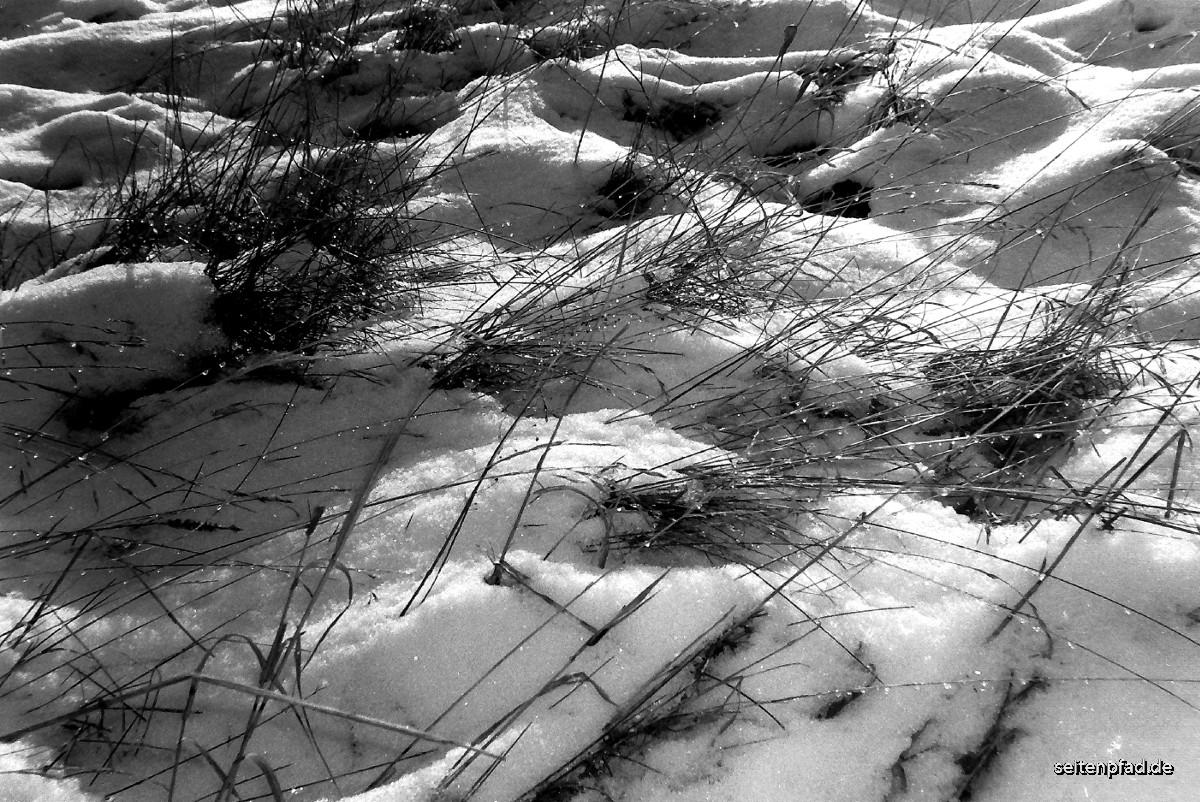 Frost im Brachfeld, IIlford HP5 Plus, entwickelt in Emofin,