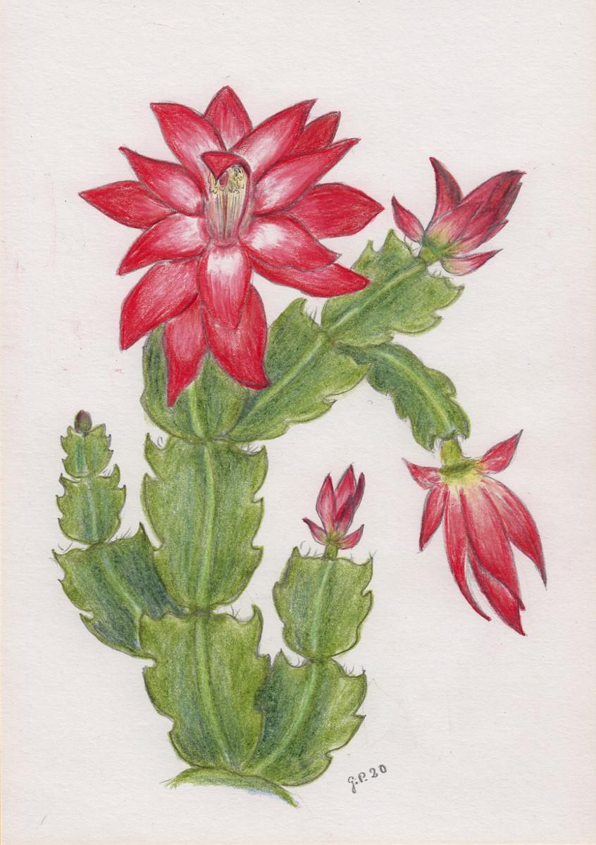 Kaktusblüten Zeichnung mit Buntstiften (Faber Castell) Din A5