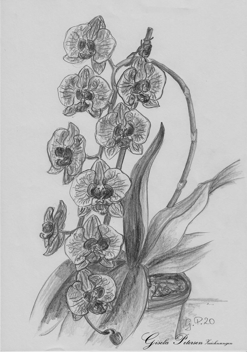Blütenranke einer Orchidee Zeichnung mit Bleistiften B2 DIN A4