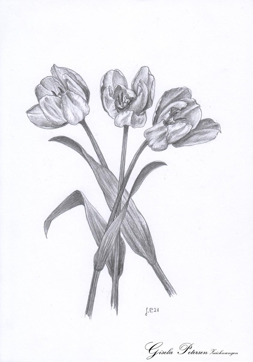 Drei Tulpenblüten, Zeichnung mit Bleistiften B DIN A4