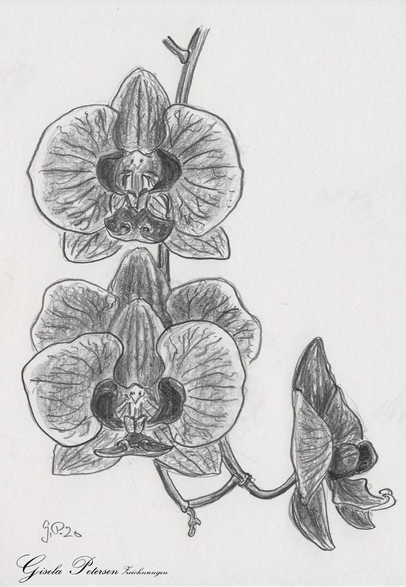 Orchideenblüten Zeichnung mit Bleistiften B2/B4 DIN A5