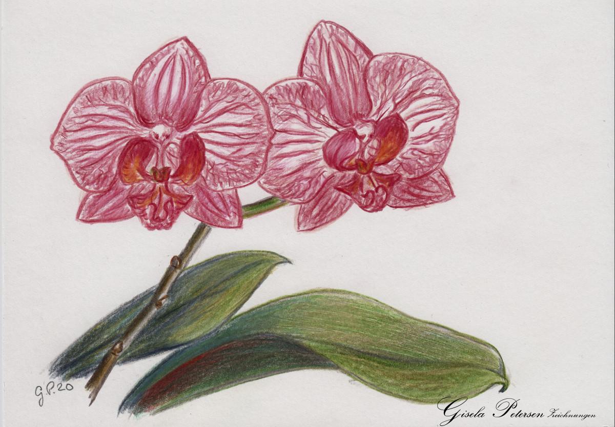 Orchideenblüten Zeichnung mit Buntstiften (Faber Castell) DIN A5