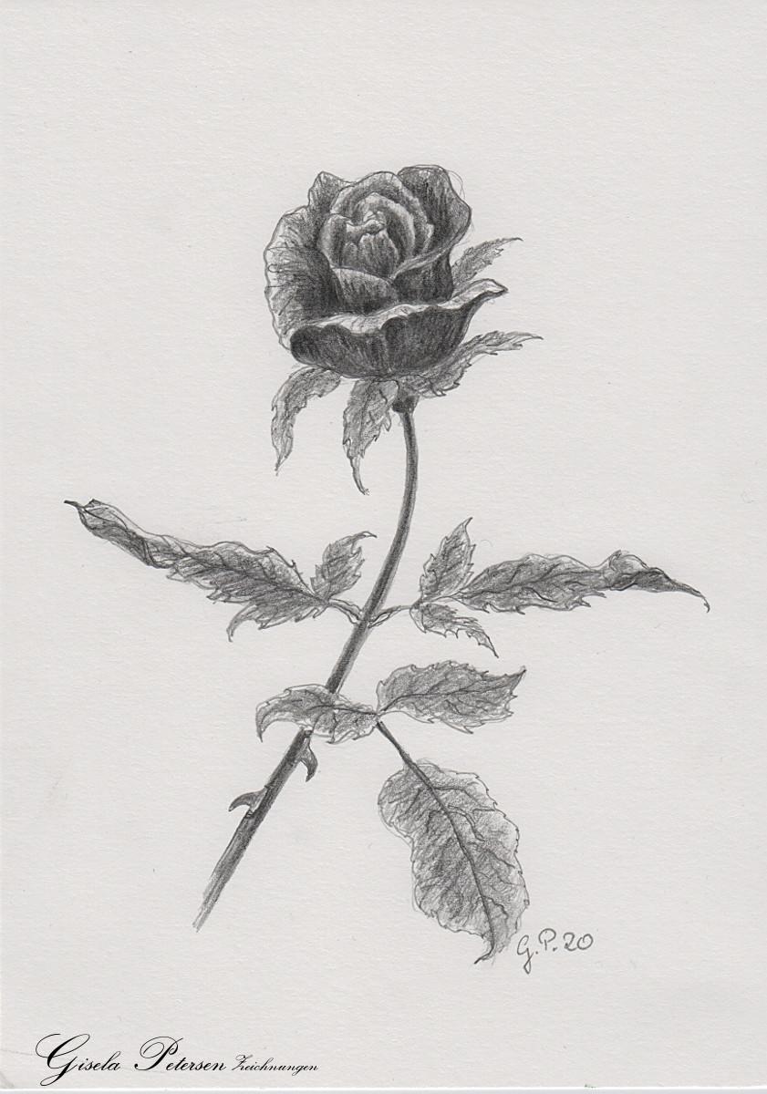 Rosenblüte Zeichnung mit Bleistiften B2/B4 DIN A5