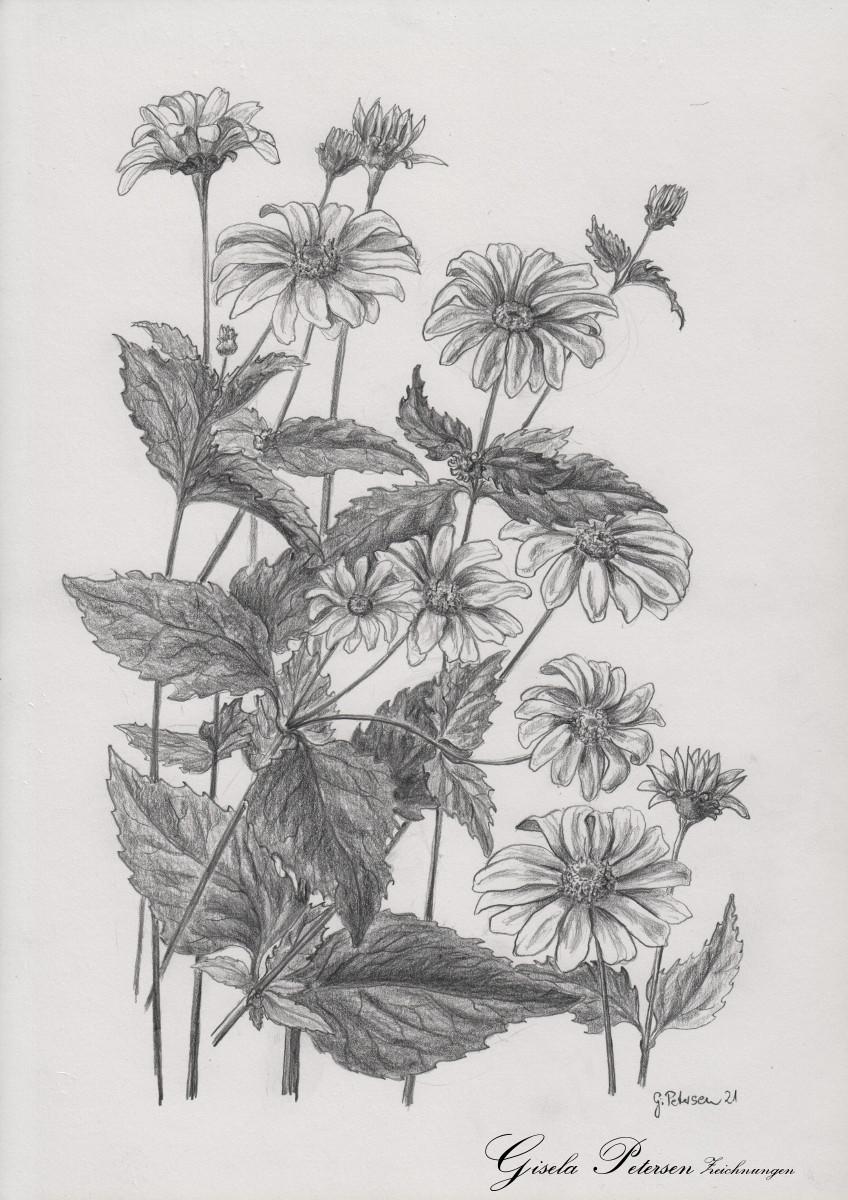 Sommerblumen, Zeichnung mit Bleistift B/2B DIN A 4