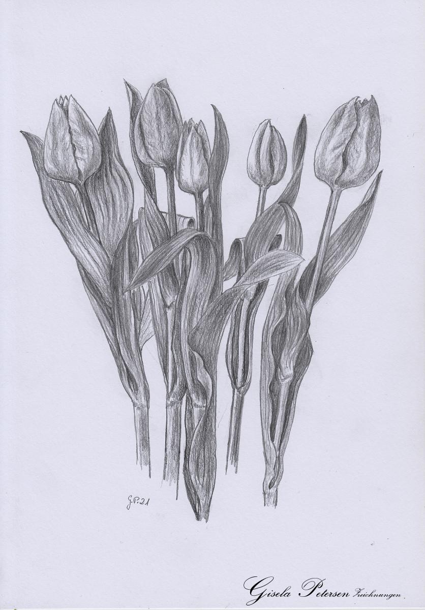 Tulpenblüten, Zeichnung mit Bleistift B2/B4 DIN A4