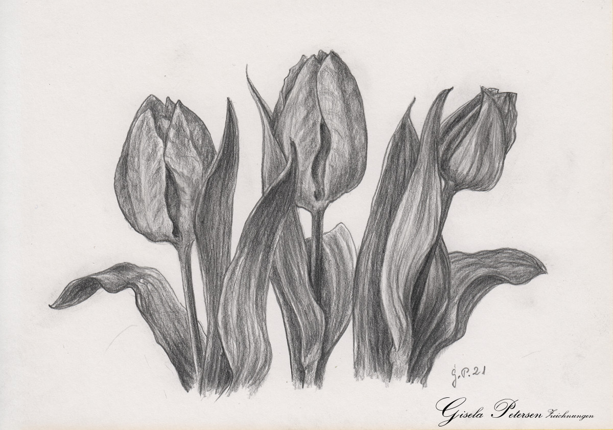 Tulpenblüten, Zeichnung mit Bleistift B4 DIN A5