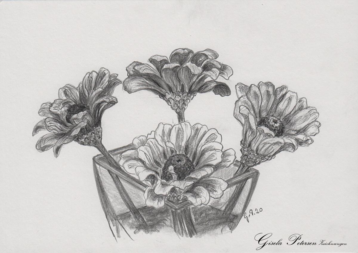 Zinnienblüten Zeichnung mit Bleistiften B2/B4 DIN A5