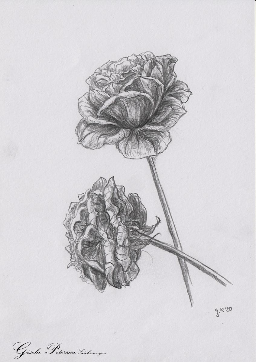 Rosenblüten Zeichnung mit Bleistiften B2/B4 DIN A5