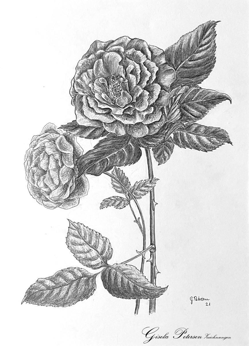zwei Rosenblüten, Zeichnung mit Bleistift 2B/4B DIN A 3