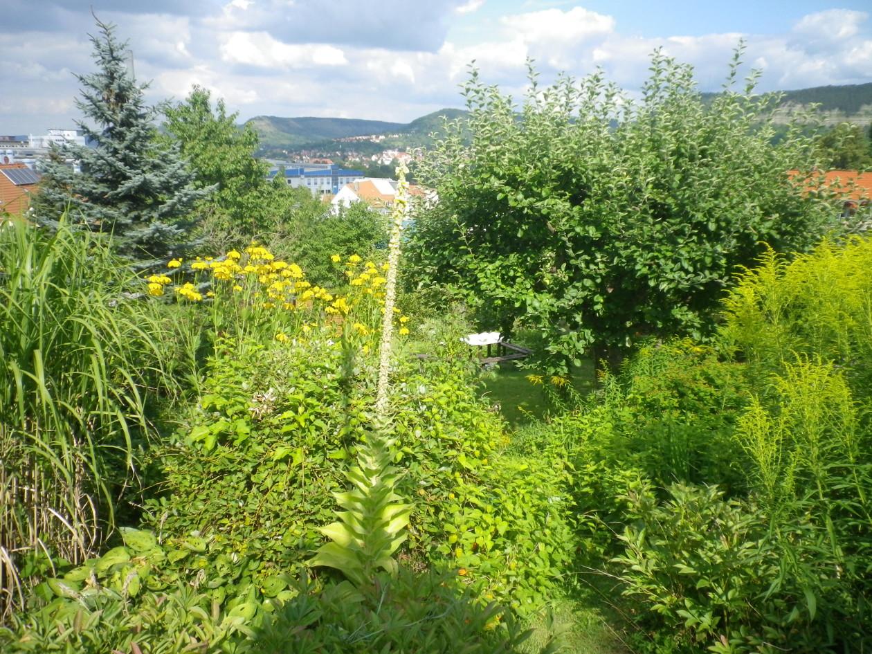 Blick von der Terrasse hangabwärts- Richtung Stadt