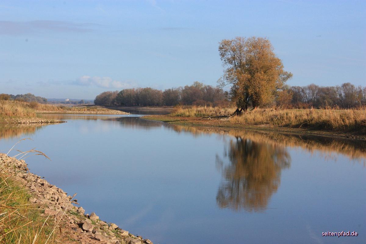 Nebenarm der Elbe