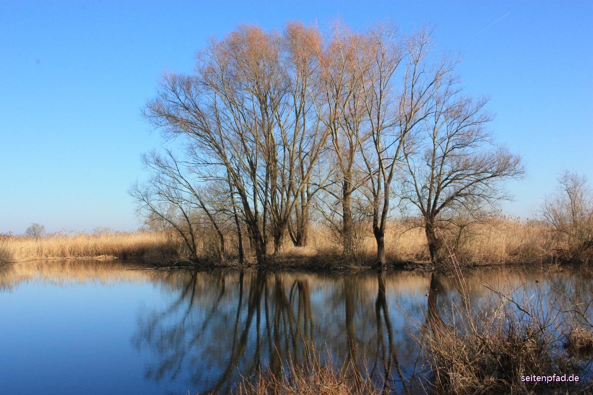 Ein Vorfrühlingstag in den Elbwiesen bei Bleckede