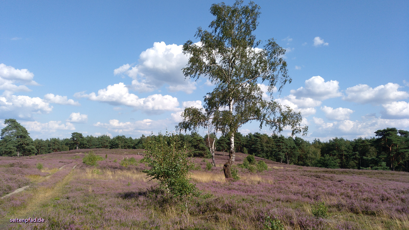 In der Schwindebecker Heide