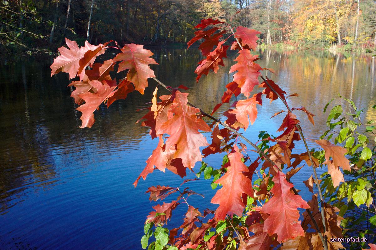 Sonntäglicher Herbstspaziergang