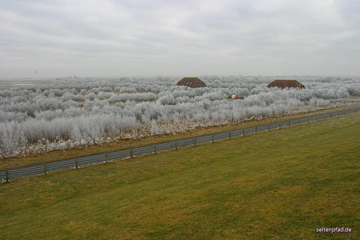 29. Januar 2006: Frostzauber im Speicherkoog bei Meldorf
