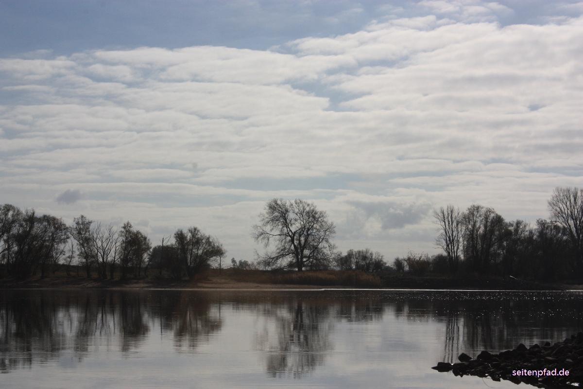 Die Elbe beim Heisterbusch im Gegenlicht